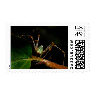 Lynx Spider Postage Stamp