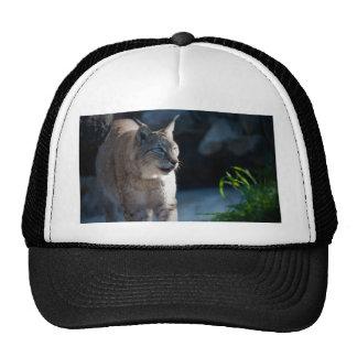 Lynx Trucker Hat