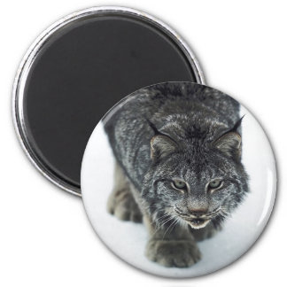 Lynx Winter Refrigerator Magnet