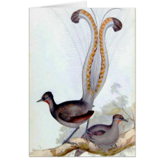 Lyre Bird Vintage Poster Card