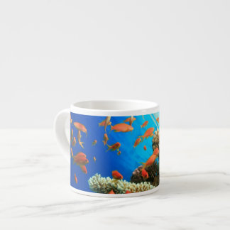 Lyretail anthias on coral reef espresso cup