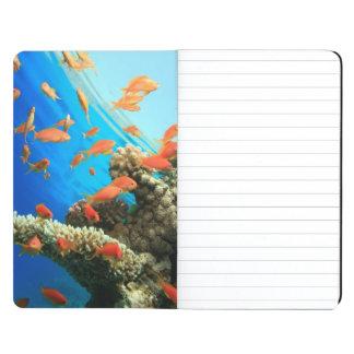 Lyretail anthias on coral reef journal