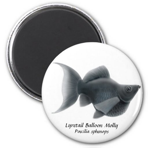 Lyretail Balloon Molly Magnet
