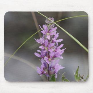 Lythrum Salicaria Mouse Pad
