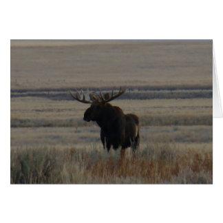 M0001 Bull Moose Greeting Card