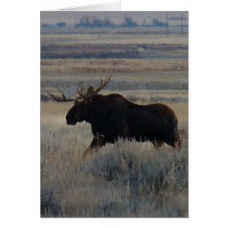 M0002 Bull Moose Card