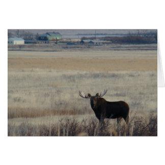 M0003 Bull Moose on Farmlands Greeting Card