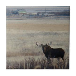 M0003 Bull Moose Small Square Tile