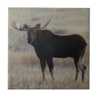 M0004 Bull Moose Small Square Tile