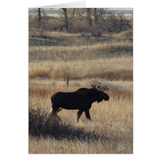 M0005 Bull Moose Sand Hills Greeting Card