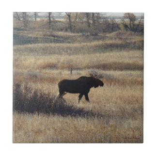 M0005 Bull Moose Small Square Tile