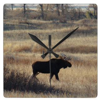 M0005 Bull Moose Square Wall Clock