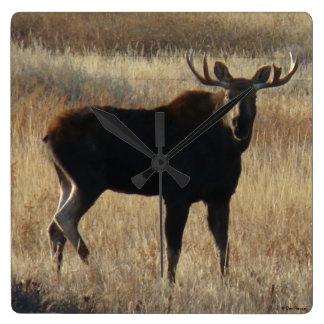 M0007 Young Bull Moose Square Wall Clock