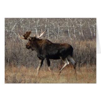 M0008 Bull Moose Card