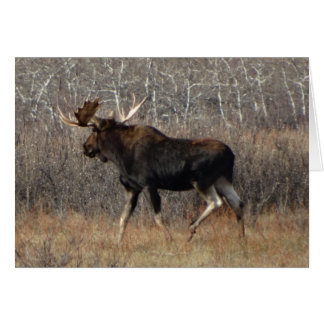 M0008 Bull Moose Greeting Card
