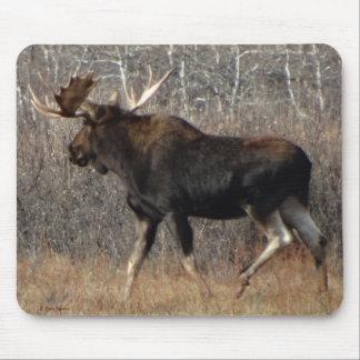 M0008 Bull Moose Mouse Pad