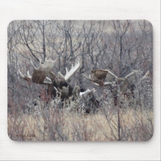 M0009 Bull Moose Laying Mouse Pad