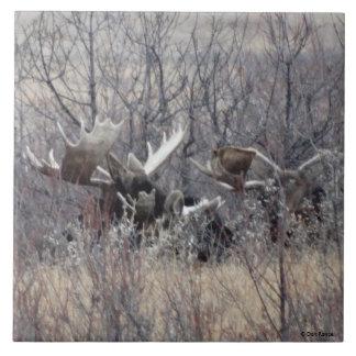 M0009 Bull Moose Laying Tile