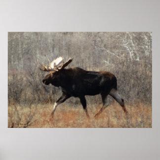 M0010 Bull Moose Poster