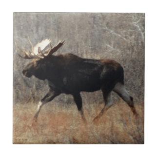 M0010 Bull Moose Tile
