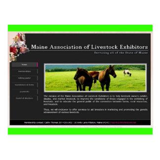 M.A.L.E: Maine Association of Livestock Exhibitors Postcard