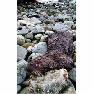 M/V Selendang Ayu Oil Spill Unalaska 2004 Photo Cutouts