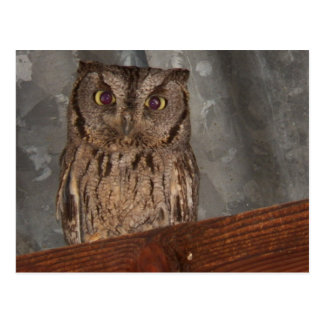 Ma Pa s Owl Over In Phoenix Area Postcards
