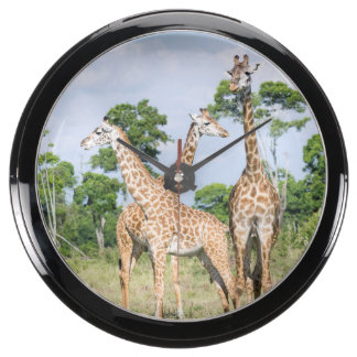Maasai Giraffe Aqua Clocks