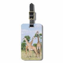 Maasai Giraffe Bag Tag