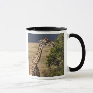 Maasai Giraffe (Giraffe Tippelskirchi) as seen 2 Mug