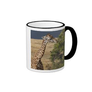 Maasai Giraffe (Giraffe Tippelskirchi) as seen 2 Coffee Mug