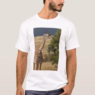 Maasai Giraffe (Giraffe Tippelskirchi) as seen 2 T-Shirt