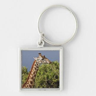 Maasai Giraffe (Giraffe Tippelskirchi) as seen 3 Keychain