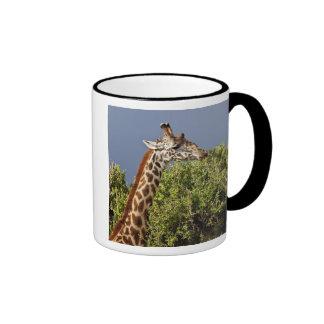 Maasai Giraffe (Giraffe Tippelskirchi) as seen 3 Coffee Mugs