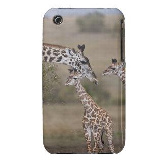 Maasai Giraffe Giraffe Tippelskirchi as seen iPhone 3 Cover