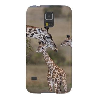 Maasai Giraffe (Giraffe Tippelskirchi) as seen Case For Galaxy S5