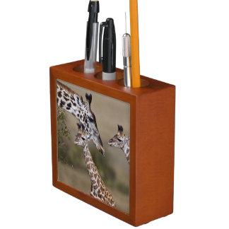 Maasai Giraffe (Giraffe Tippelskirchi) as seen Desk Organizer