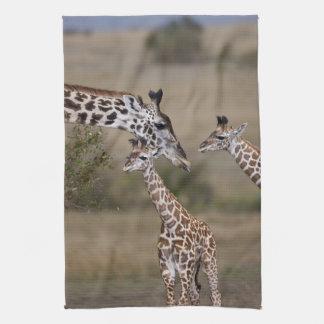 Maasai Giraffe (Giraffe Tippelskirchi) as seen Kitchen Towel