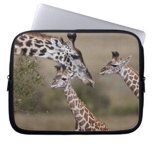 Maasai Giraffe (Giraffe Tippelskirchi) as seen Laptop Sleeve