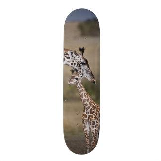 Maasai Giraffe (Giraffe Tippelskirchi) as seen Skateboard Deck