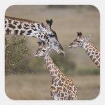 Maasai Giraffe (Giraffe Tippelskirchi) as seen Sticker