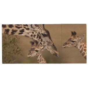 Maasai Giraffe (Giraffe Tippelskirchi) as seen Wood Flash Drive