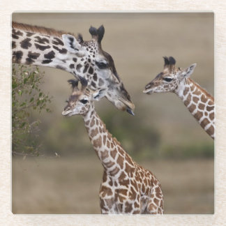 Maasai Giraffe (Giraffe Tippelskirchi) Glass Coaster