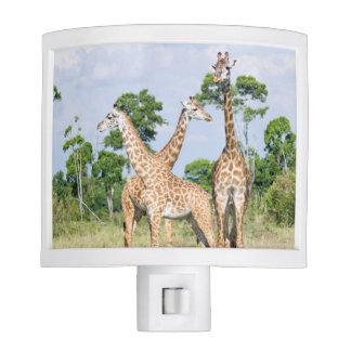 Maasai Giraffe Night Light