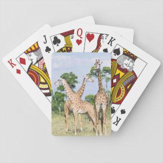 Maasai Giraffe Card Deck