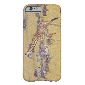 Maasai Giraffes roaming across the Maasai Mara 2 Barely There iPhone 6 Case