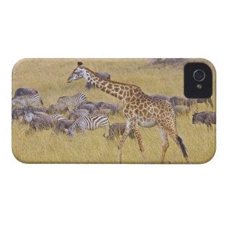 Maasai Giraffes roaming across the Maasai Mara 2 iPhone 4 Case