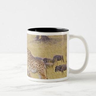 Maasai Giraffes roaming across the Maasai Mara 2 Two-Tone Coffee Mug
