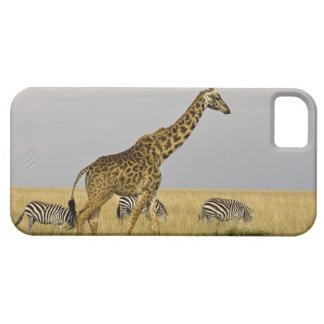 Maasai Giraffes roaming across the Maasai Mara 3 iPhone SE/5/5s Case