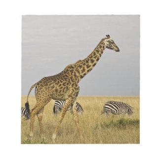 Maasai Giraffes roaming across the Maasai Mara 3 Note Pad